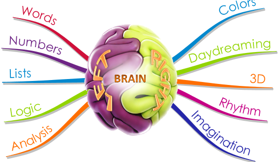 The mind mapping brain
