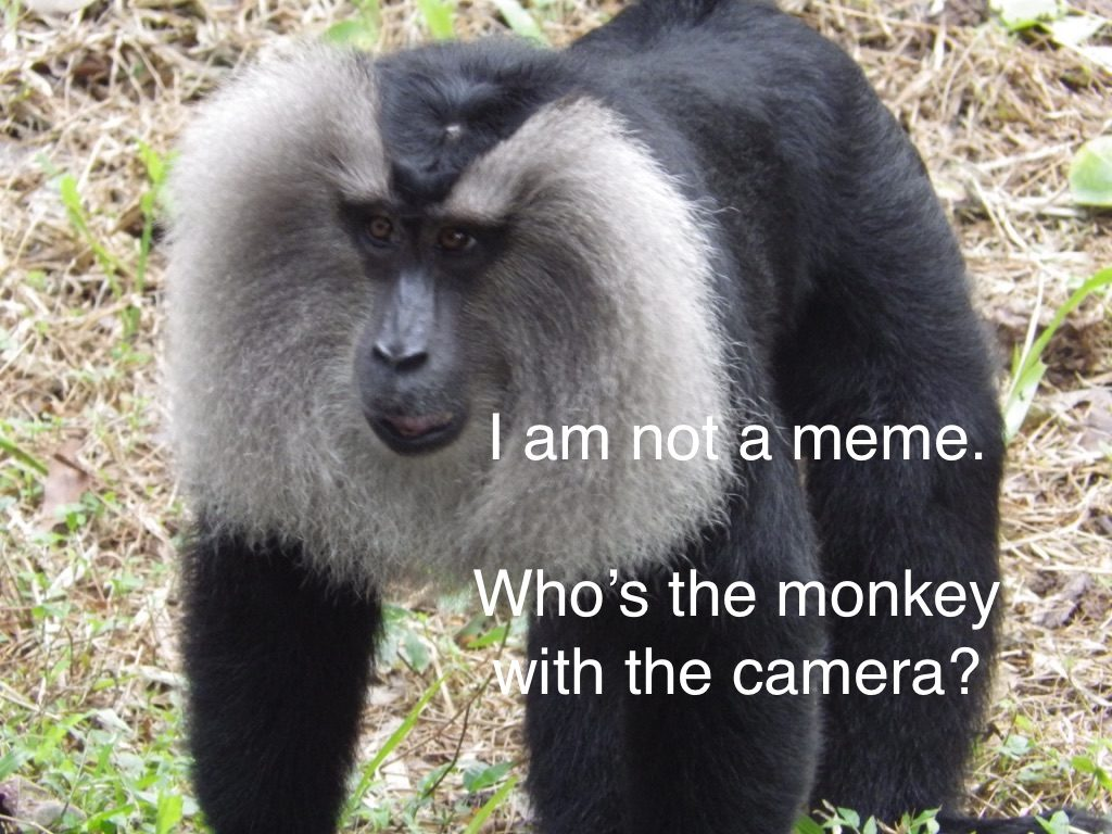 Random picture of an ape, this is not a meme
